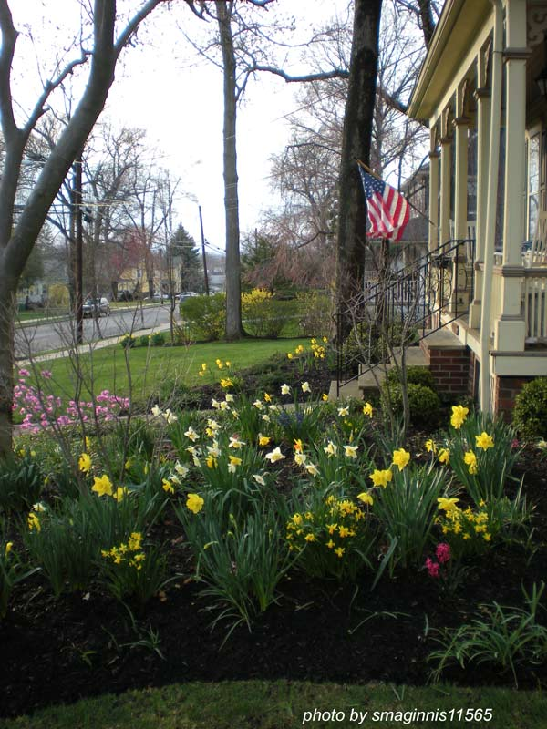 spring bulbs in bloom next to front porch