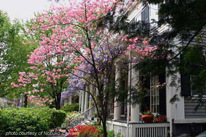trees in full bloom in front of porch for spring