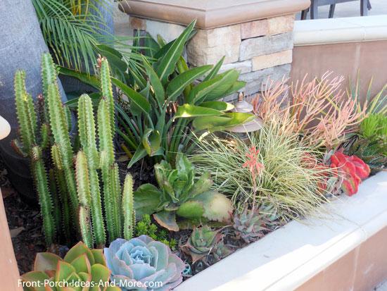 succulents next to front porch