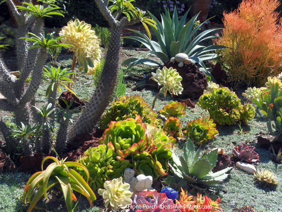 Succulent garden designs pictures of succulents front for Garden design using succulents