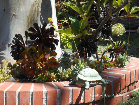 Succulent garden designs pictures of succulents front porch ideas succulents planted in a mass design workwithnaturefo