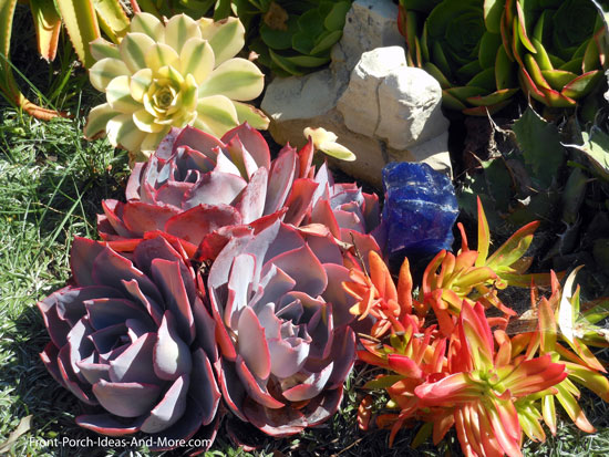 colorful and picturesque succulent plants
