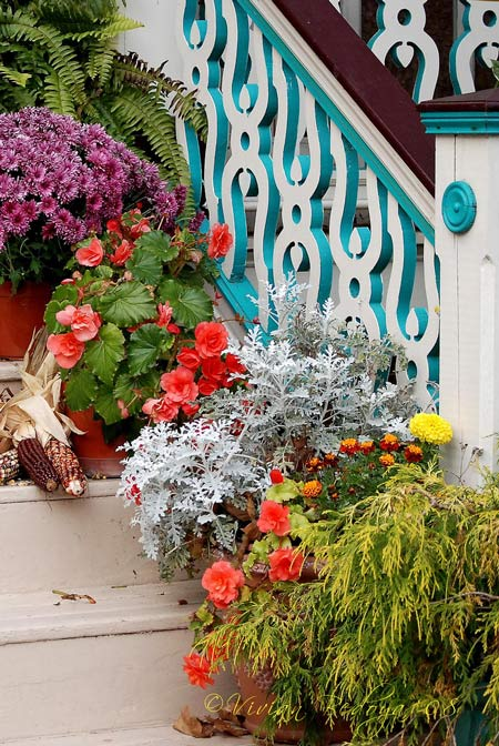 beautiful potted flowers on the porch steps