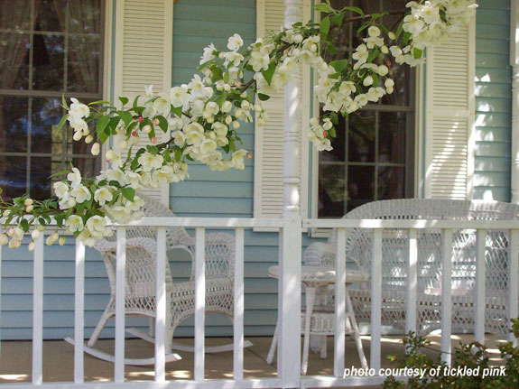 spring blossoms in front of porch