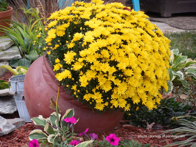 tilted clay pot with marigolds