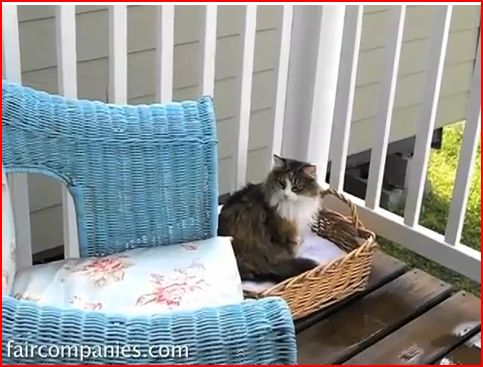 Tiny house design - their kitty loves the porch