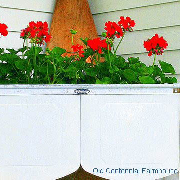 old white washtub with geraniums