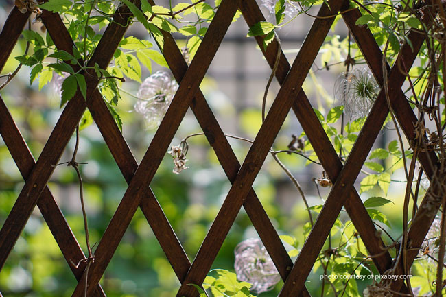 wooden garden trellis with vines