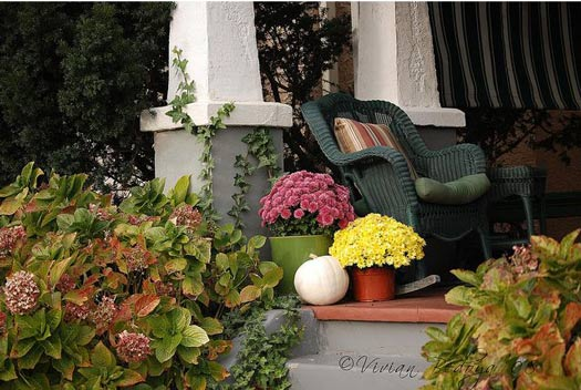 hydrangeas, mums and wicker rocker on the porch