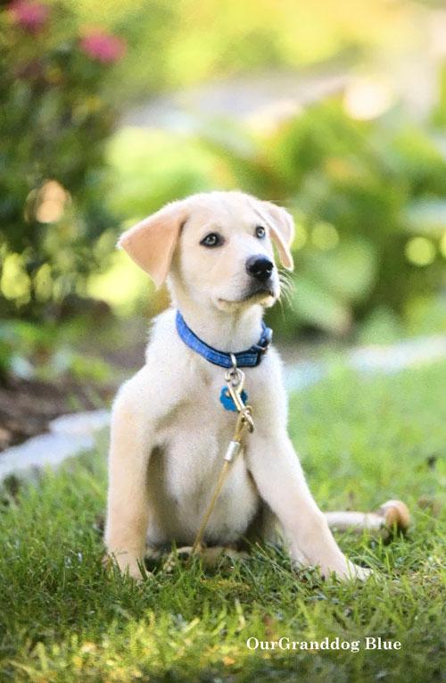 our granddog blue