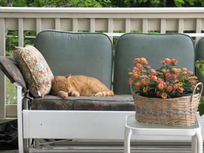 porch cat taking nap on porch glider