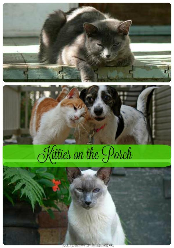 Cats enjoy the porch