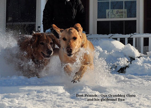 two dogs running through the snow