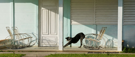 lazy dog stretching on front porch