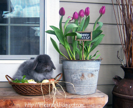 spring time bunny on porch