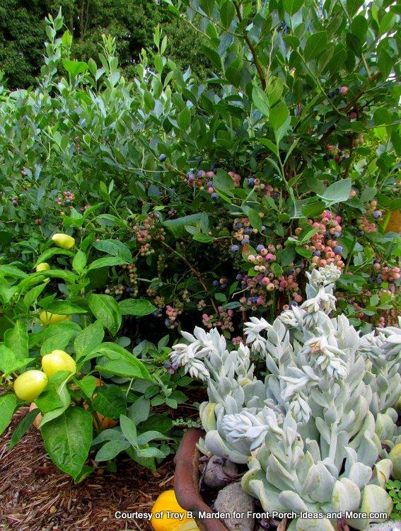 snacking garden at side entrance - how fun