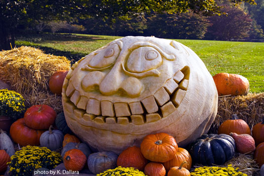 huge pumpkiin with carved smiling face