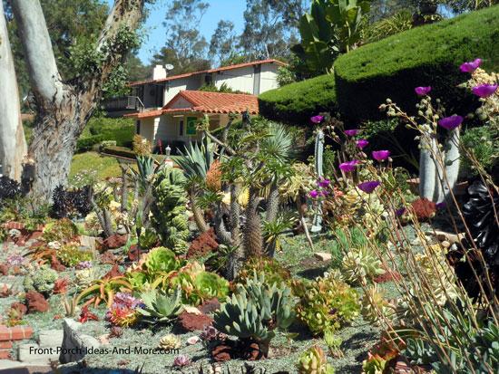 wide variety of succulent plants in garden