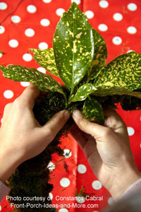 attach foliage to wreath