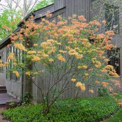 Beautiful azalea around the porch by J. Paul Moore