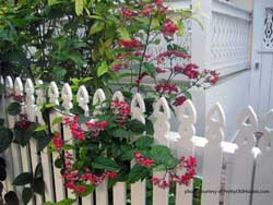 picket fence design and landscaping