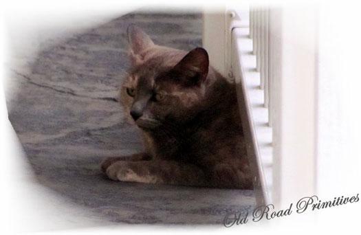 Kali enjoys the porch