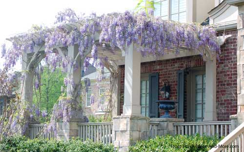 Wysteria covered porch roof