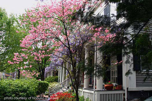 Ideas for Spring Decorating