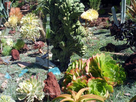 beautiful array of succulent plants