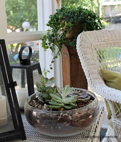 plants on the porch