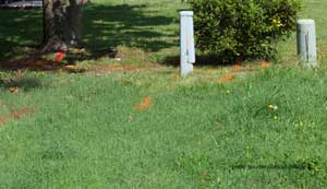 utility easement showing orange markings for electrical lines