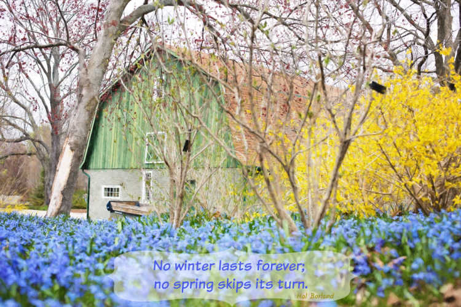 A beautiful barn in springtime
