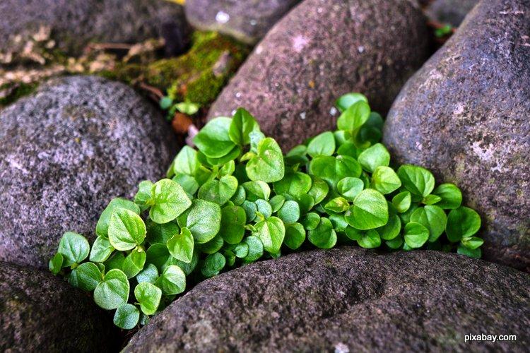 plants tucked in between rocks make for a spendid rock garden