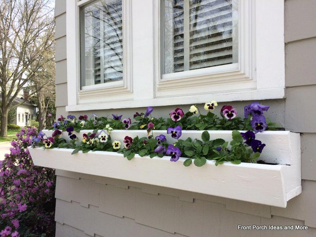 Beautiful pansies in window box
