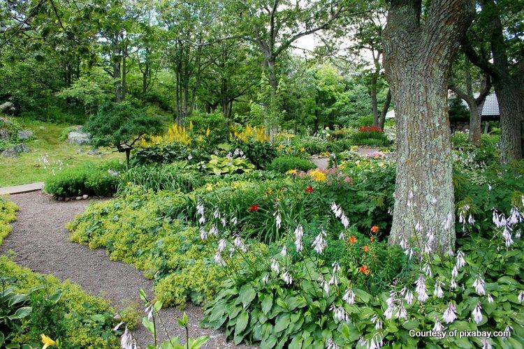 Shady backyards offer beautiful shade garden opportunities