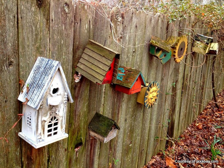 Hang birdhouses on your fence for interest and appeal