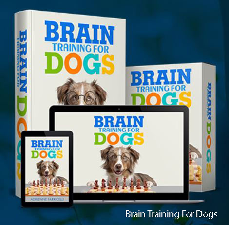 dog training material