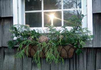 Window box with Christmas greenery
