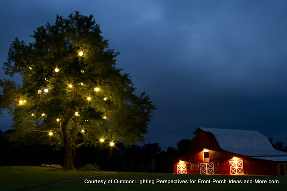 Iconic barn and large tree lit with christmas lights
