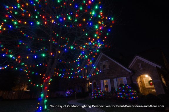 festive christmas lights on tree and shrubs