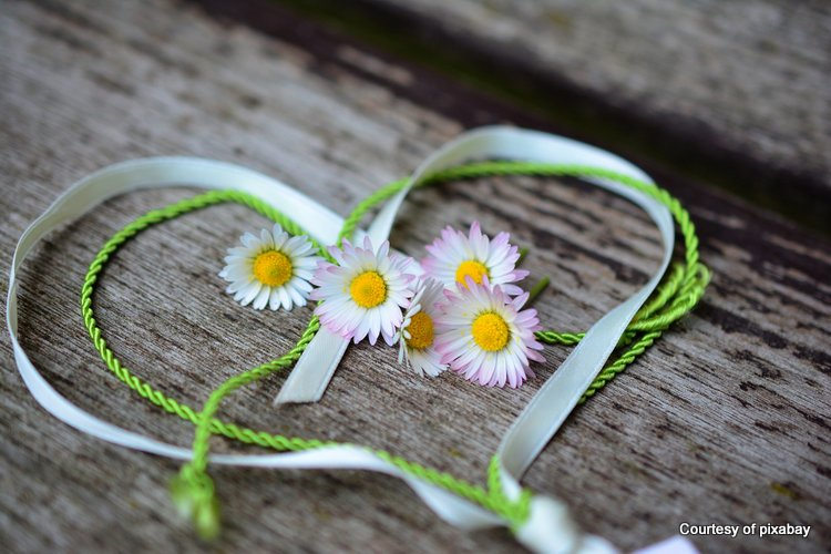 daisies surrounded by green ribbon