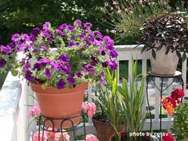 Beautiful porch flowers