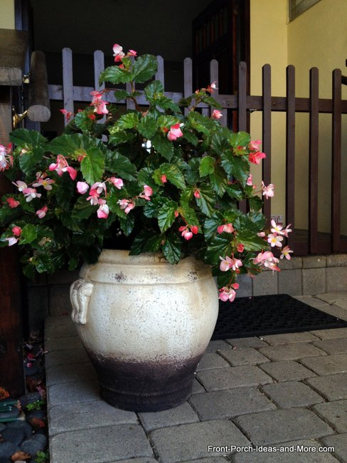 Pot of begonias in front of porch gate