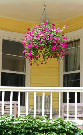 Basket of pink petunias