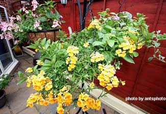 porch basket of flowers