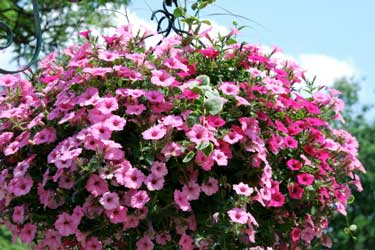very colorful hanging basket