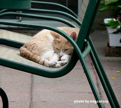 cat sleeping on porch chair