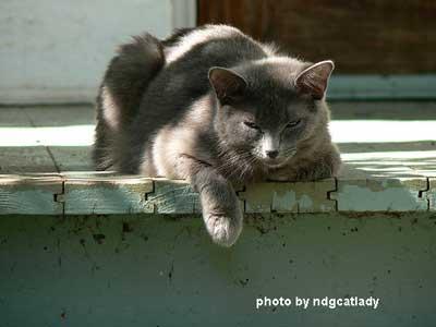 sleepy porch cat with leg over porch floor