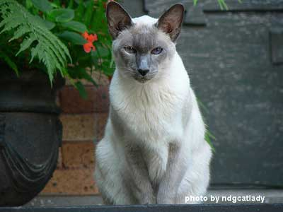 porch cat