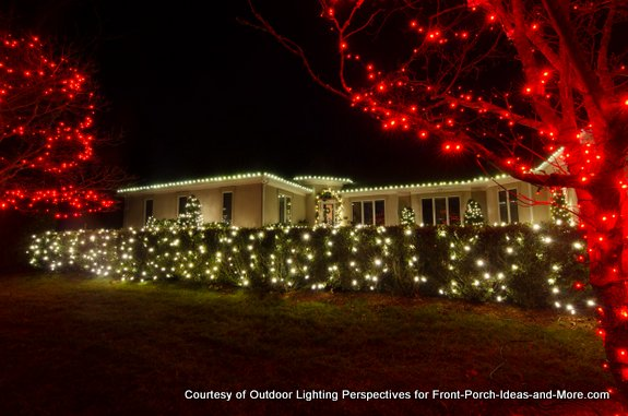 multiple strings of christmas lights on shrubs